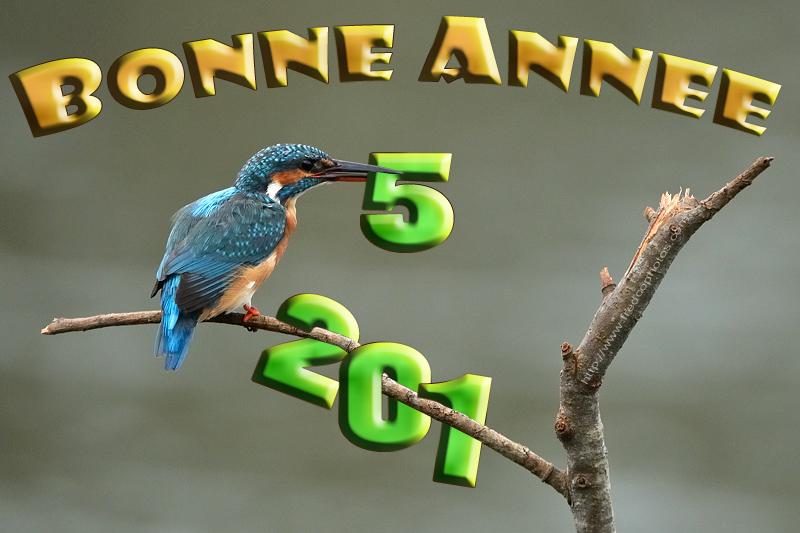 bonne-annee-2015-4