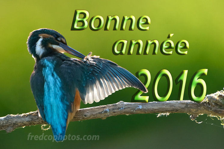 Bonne_annee_1-copyright